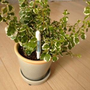 植物 サスティー 水やり